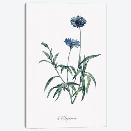 Imperial Blue Canvas Print #KDO5} by Kelly Donovan Canvas Wall Art