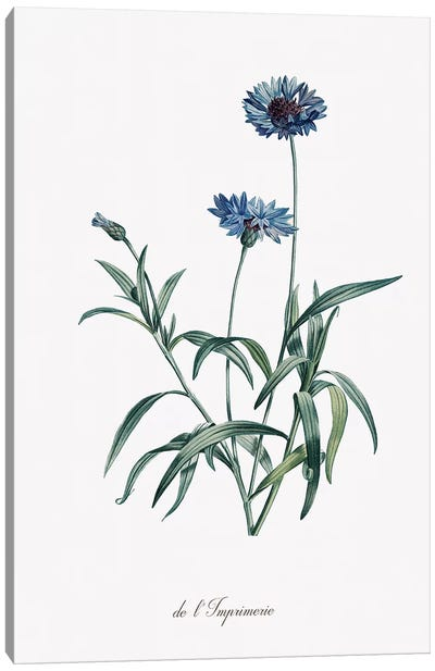Imperial Blue Canvas Art Print