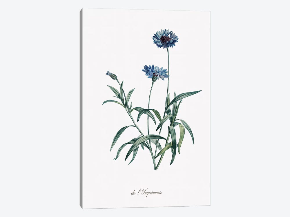 Imperial Blue by Kelly Donovan 1-piece Art Print