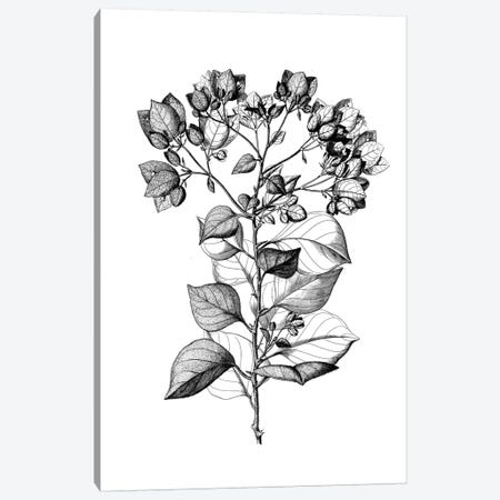 Botanical Black And White I Canvas Print #KDO7} by Kelly Donovan Canvas Wall Art
