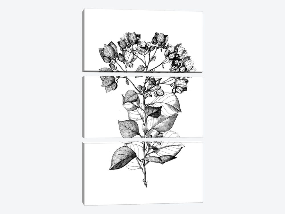 Botanical Black And White I by Kelly Donovan 3-piece Art Print