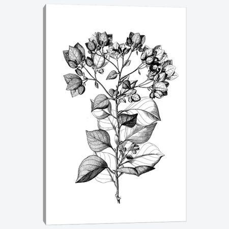 Botanical Black And White I Canvas Print #KDO7} by Kelly Donovan Canvas Wall Art