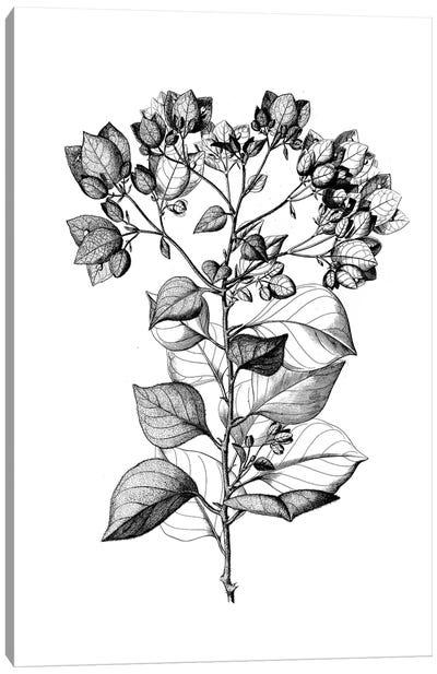 Botanical Black And White I Canvas Art Print