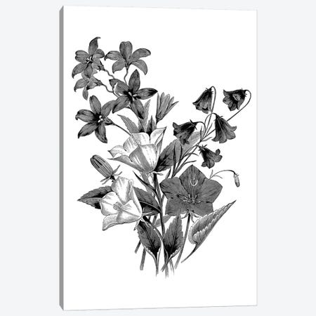 Botanical Black And White II Canvas Print #KDO8} by Kelly Donovan Art Print