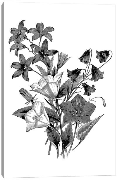 Botanical Black And White II Canvas Art Print