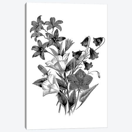 Botanical Black And White II Canvas Print #KDO8} by Kelly Donovan Art Print