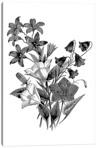 Botanical Black And White II Canvas Art Print