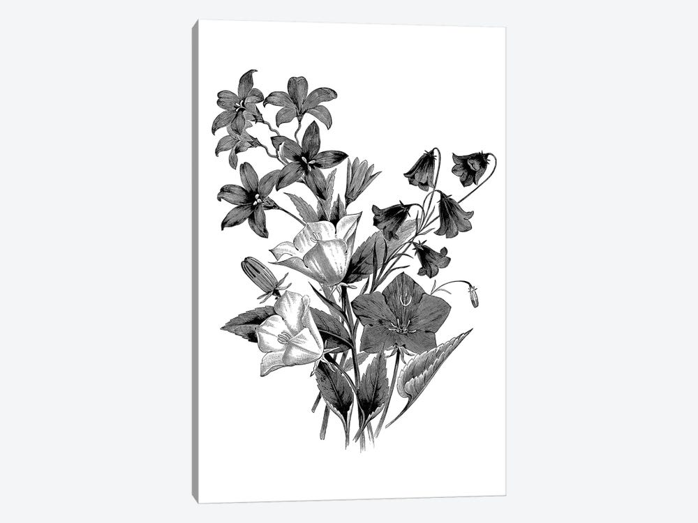 Botanical Black And White II by Kelly Donovan 1-piece Canvas Artwork