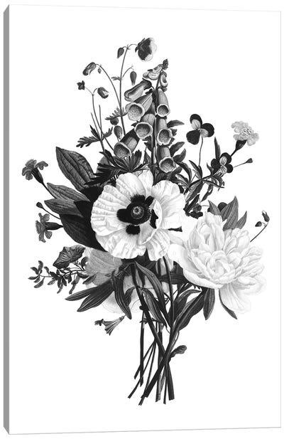 Botanical Black And White III Canvas Art Print