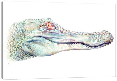 Albino Alligator Canvas Art Print