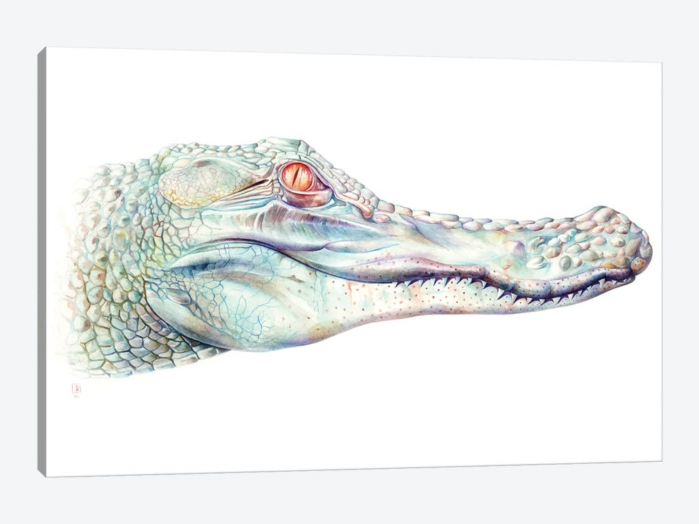 Albino Alligator by Brandon Keehner 1-piece Canvas Art
