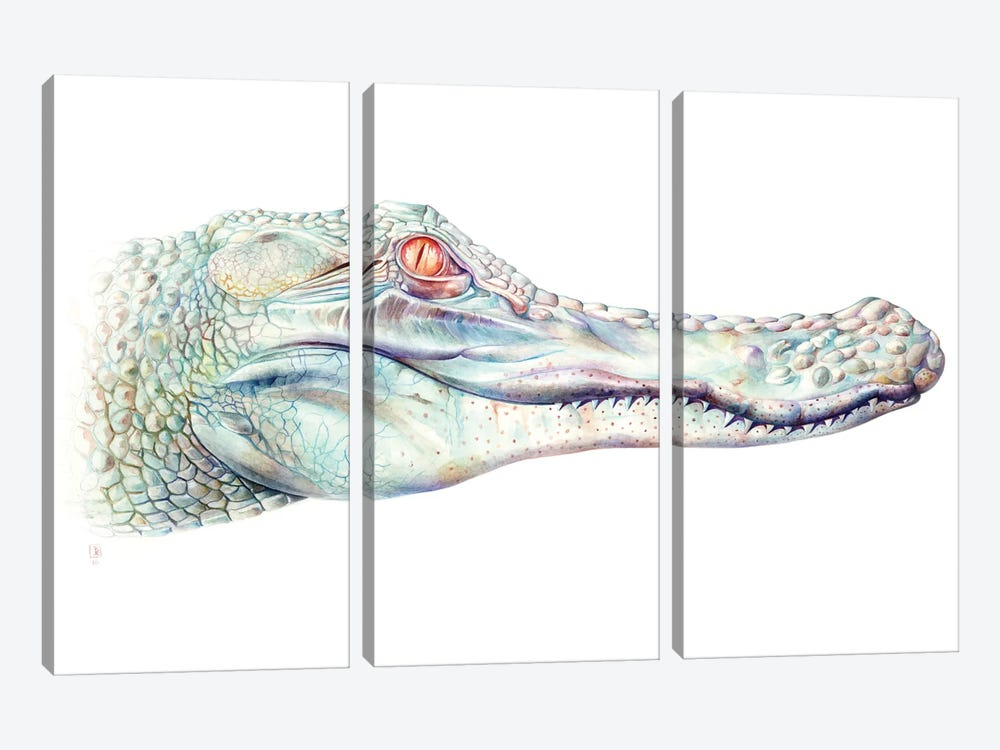 Albino Alligator by Brandon Keehner 3-piece Canvas Artwork