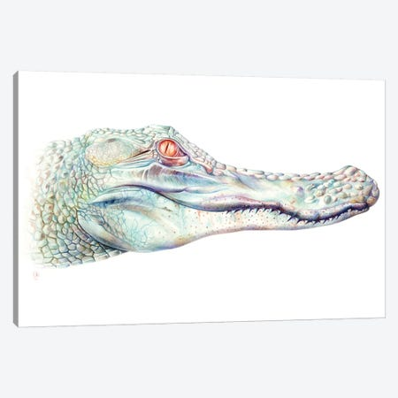 Albino Alligator Canvas Print #KEE1} by Brandon Keehner Canvas Art