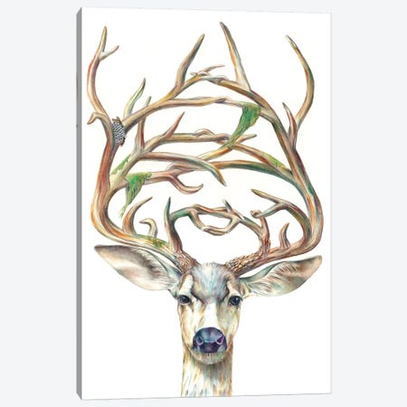 Mule Deer Buck Canvas Print #KEE4} by Brandon Keehner Canvas Art Print