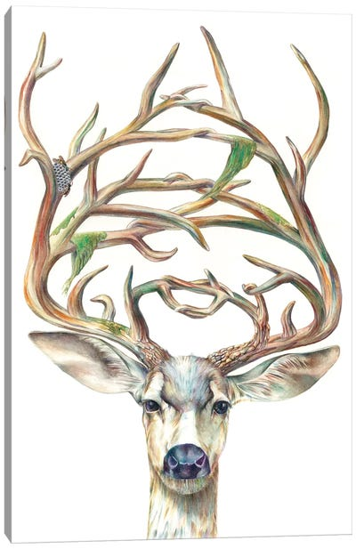 Mule Deer Buck Canvas Art Print