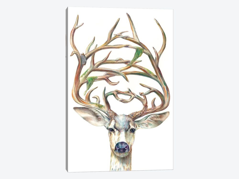 Mule Deer Buck 1-piece Art Print