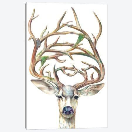 Mule Deer Buck Canvas Print #KEE4} by Brandon Keehner Canvas Art Print