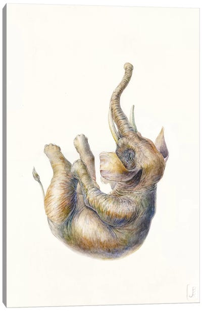 Elephant Falling Canvas Art Print