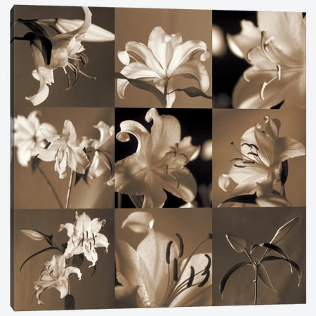 Lily Garden Canvas Print #KEL23} by Caroline Kelly Canvas Artwork