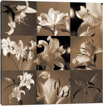 Lily Garden Canvas Art Print