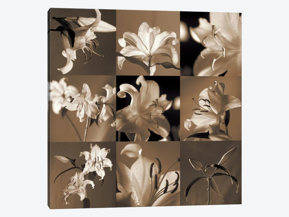 Lily Garden by Caroline Kelly 1-piece Canvas Art Print
