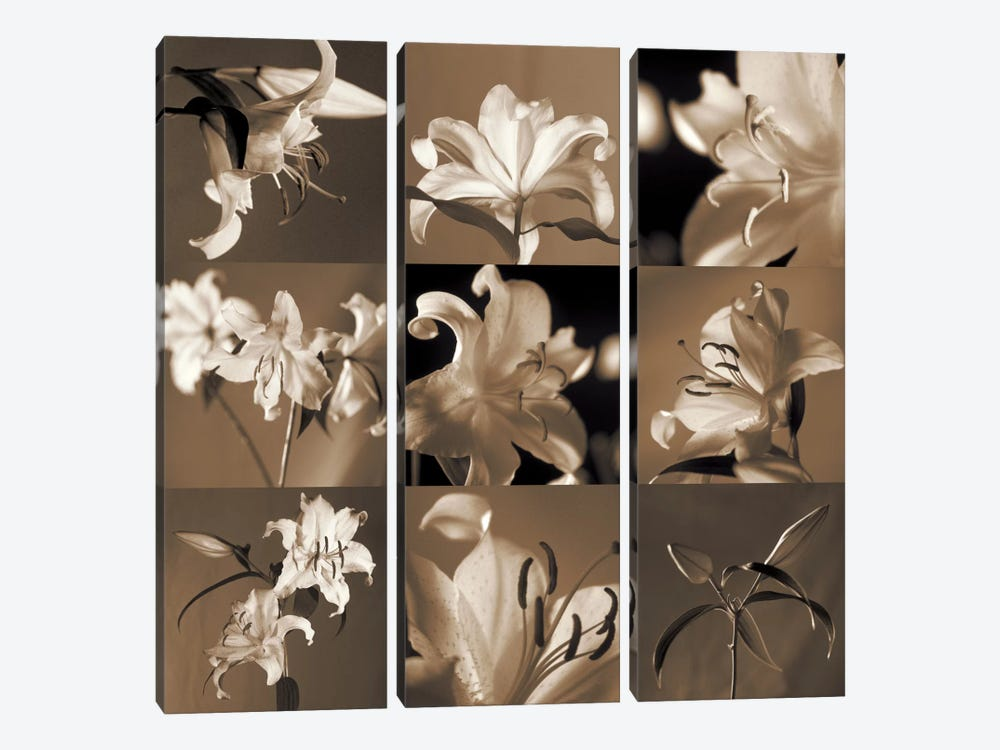 Lily Garden by Caroline Kelly 3-piece Canvas Print