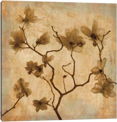 Magnolias I Canvas Print #KEL25