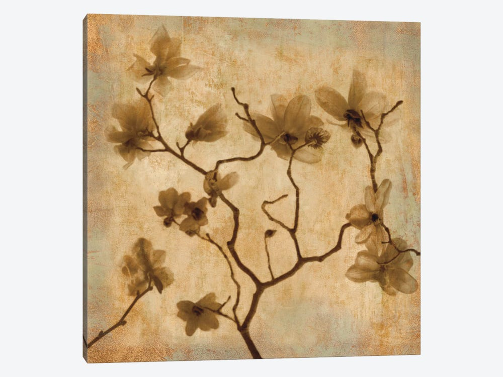Magnolias I by Caroline Kelly 1-piece Canvas Art Print