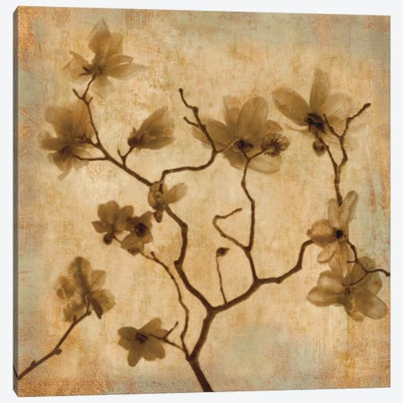 Magnolias I Canvas Print #KEL25} by Caroline Kelly Canvas Print