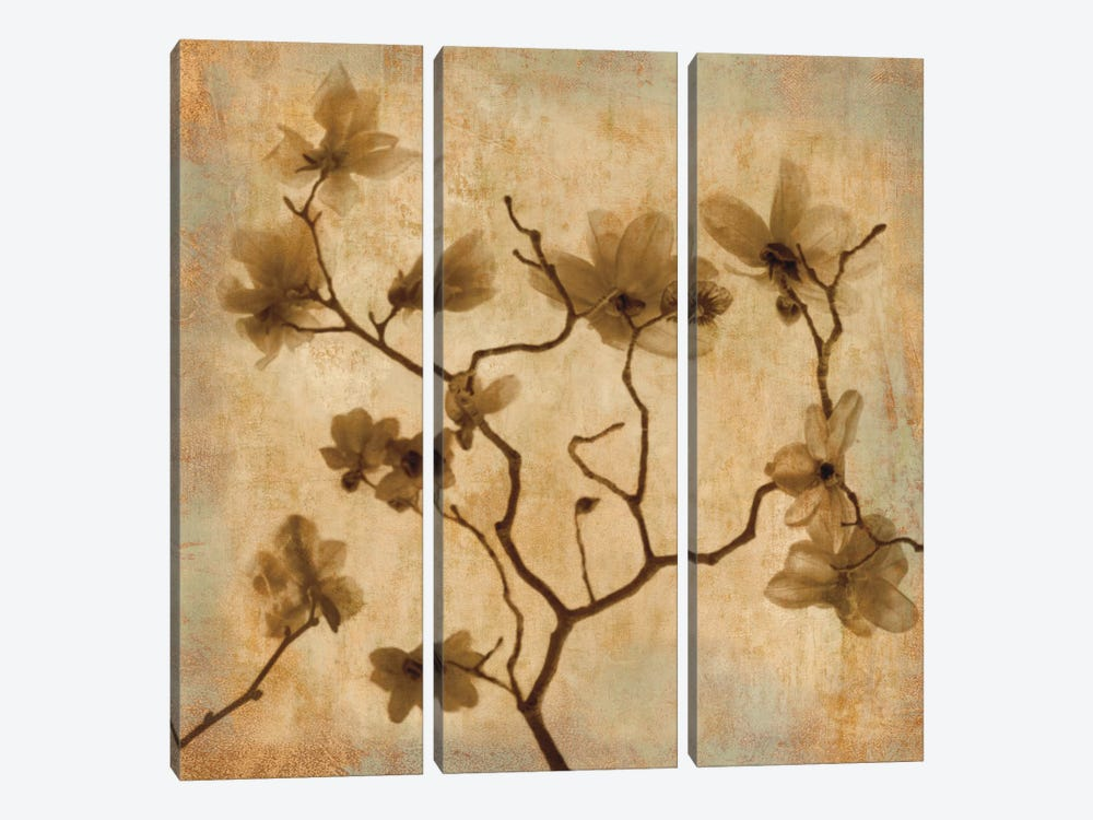 Magnolias I by Caroline Kelly 3-piece Canvas Print