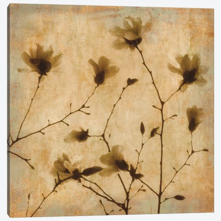 Magnolias II Canvas Print #KEL26} by Caroline Kelly Canvas Art Print