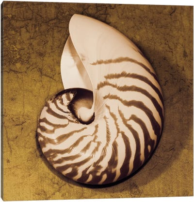 Nautilus Canvas Art Print