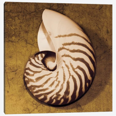 Nautilus Canvas Print #KEL27} by Caroline Kelly Art Print