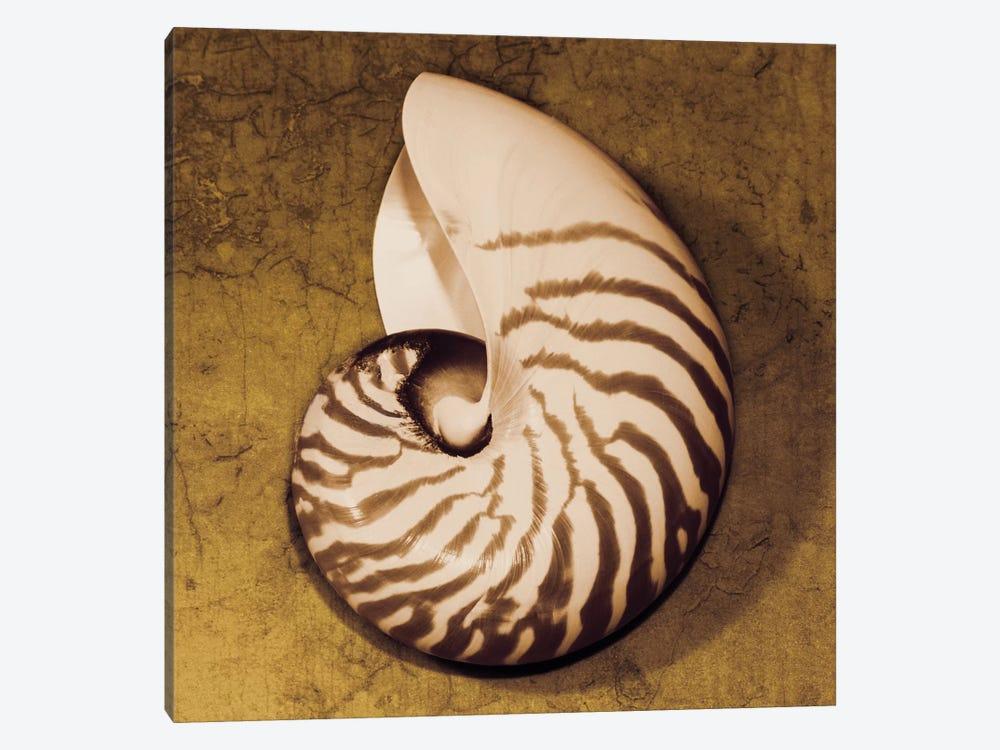 Nautilus by Caroline Kelly 1-piece Canvas Print