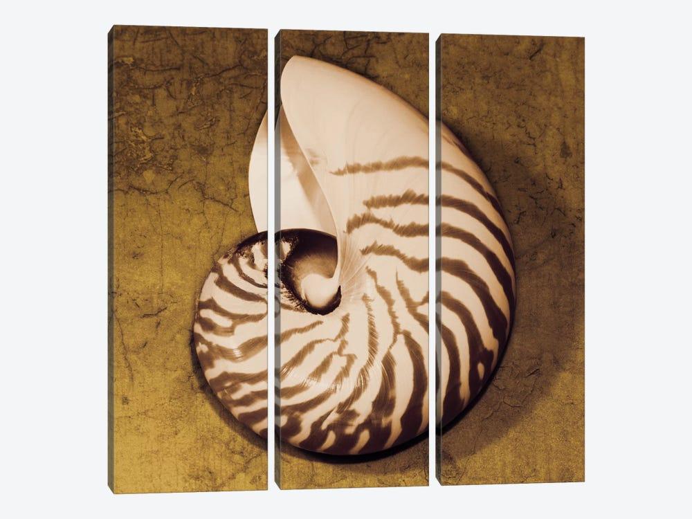 Nautilus by Caroline Kelly 3-piece Canvas Print