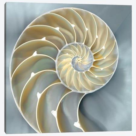 Nautilus In Blue I Canvas Print #KEL28} by Caroline Kelly Canvas Artwork