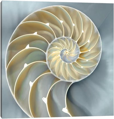 Nautilus In Blue I Canvas Art Print