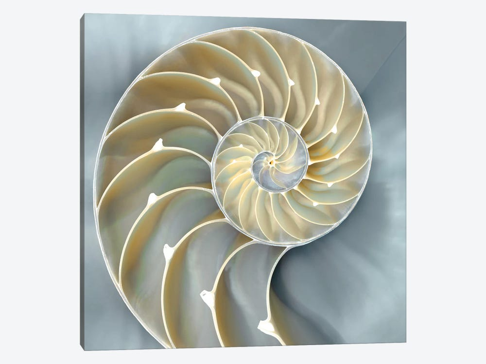 Nautilus In Blue I 1-piece Canvas Wall Art