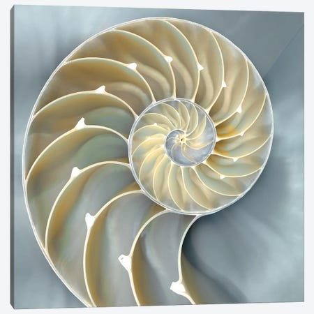 Nautilus In Blue I Canvas Print #KEL28} by Caroline Kelly Canvas Artwork