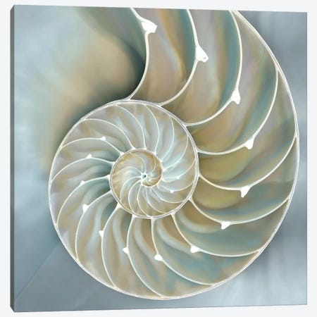 Nautilus In Blue II Canvas Print #KEL29} by Caroline Kelly Canvas Wall Art