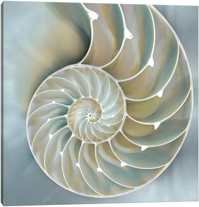 Nautilus In Blue II Canvas Art Print