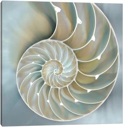 Nautilus In Blue II Canvas Print #KEL29