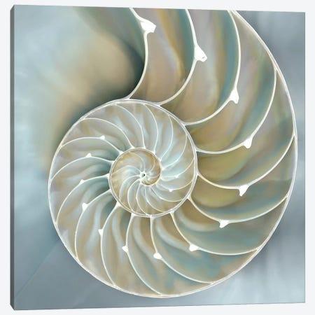 Nautilus In Blue II Canvas Print #KEL29} by Caroline Kelly Canvas Wall Art