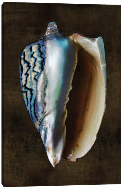 Ocean Treasure I Canvas Print #KEL34