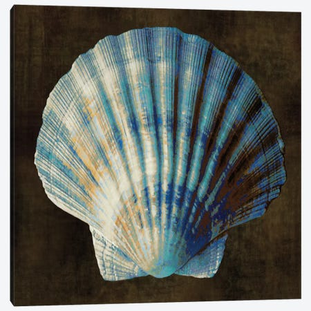 Ocean Treasure II Canvas Print #KEL35} by Caroline Kelly Canvas Art