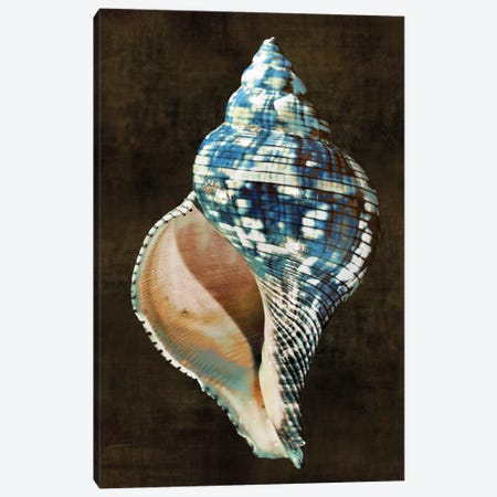 Ocean Treasure III Canvas Print #KEL36} by Caroline Kelly Canvas Art