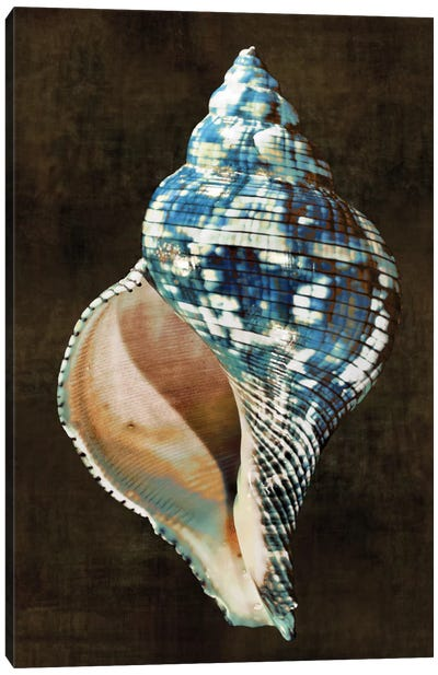 Ocean Treasure III Canvas Art Print