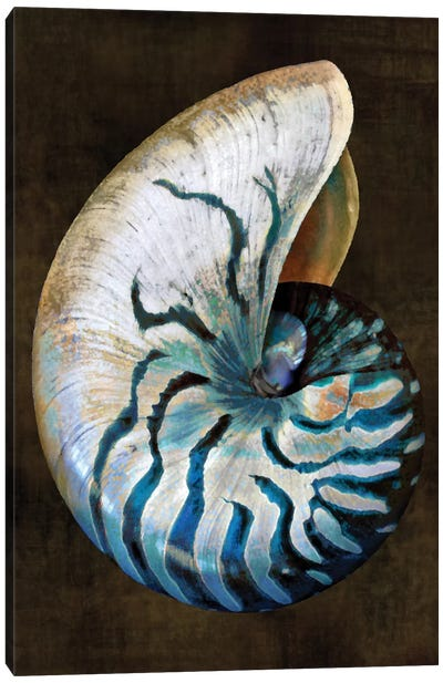 Ocean Treasure IV Canvas Art Print