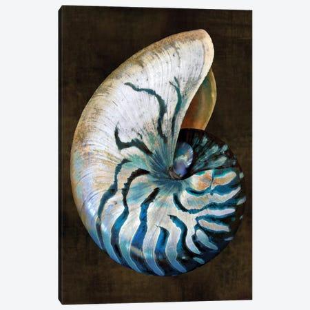 Ocean Treasure IV Canvas Print #KEL37} by Caroline Kelly Canvas Art