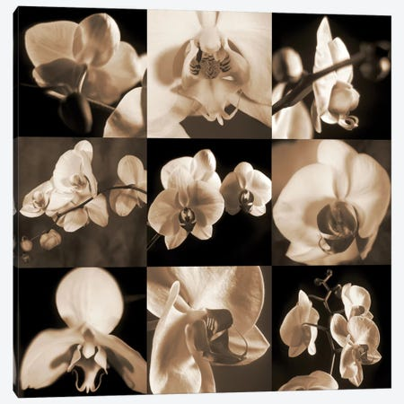 Orchid Bouquet 3-Piece Canvas #KEL38} by Caroline Kelly Art Print